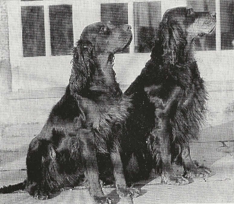 two dogs sitting side by side