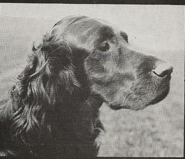 black and white image of dog's head